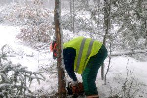 Podstawowe techniki ścinki drzew, podczas kursu ECC