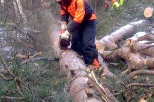 Zajęcia w lesie podczas kursu pilarzy