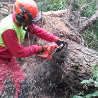 Techniken der Beseitigung von Sturmholz